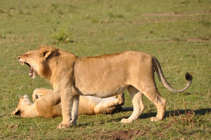 Frühstück in der Serengeti