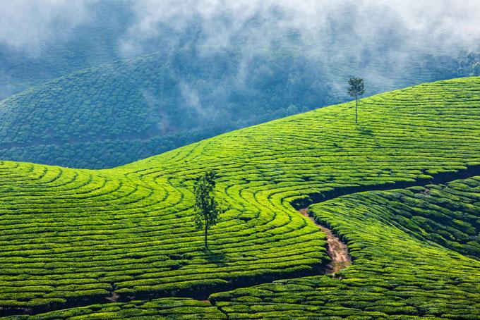 Kerala – Land der Kokospalmen