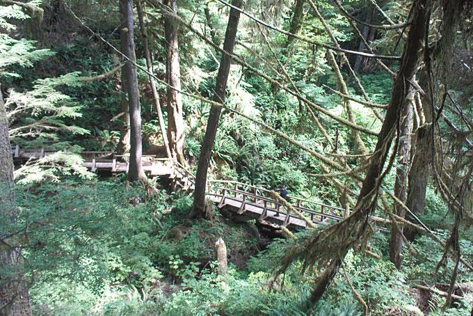 Rainforest Trail (sentier dans la forêt tropicale)