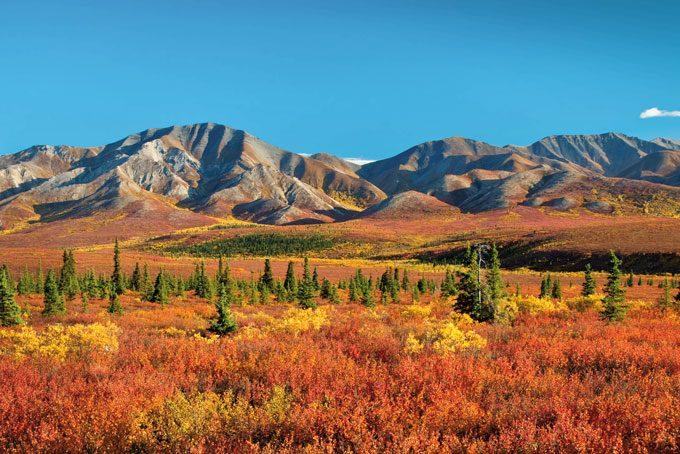 Couleurs automnales dans le parc national Denali, Alaska (ouvert jusqu'à la mi-septembre)