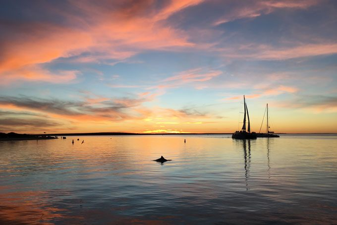 Sonnenuntergang mit einem Delfin in Monkey Mia