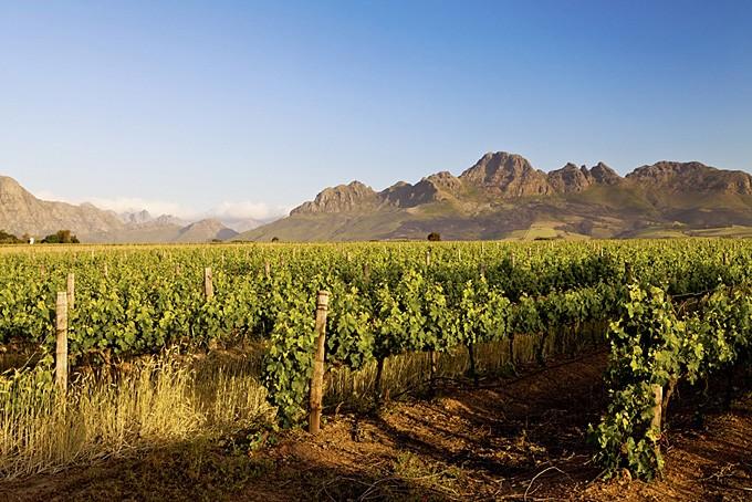 Weinanbaugebiet in Stellenbosch, Südafrika