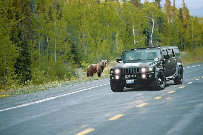 Yukon: où l'ours se régale de saumon!